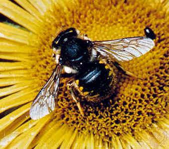 http://arquivo.ese.ips.pt/abolina/webquests/abelhas/Abelha1.jpg